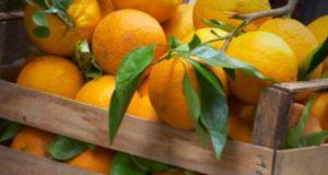 При треска помагат портокалови кори