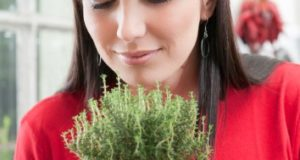 Може да излекуваме коклюш с билки