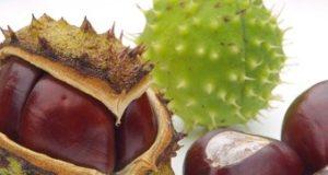 20те най-добри лечебни растения - 2