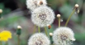 Безопасни ли са билковите лекарства – интересни научни факти за тях