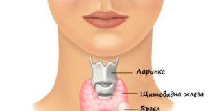 Щитовидната жлеза е един от най-важните органи