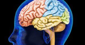 Канабисът предотвратява мозъчнитя увреждания, причинени от алкохола