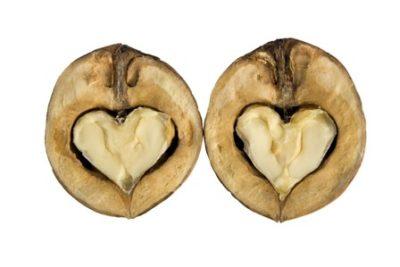 орехите са полезни за здравето