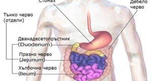 Синдром на раздразнените черва