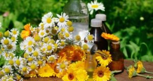 Concept of calendula and camomille  flower essential oil and tincture - beauty treatment.