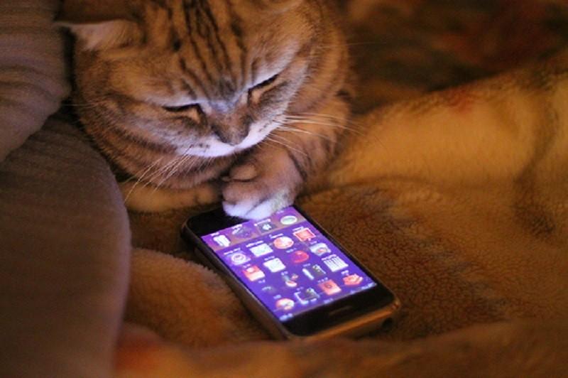 smartfon-san