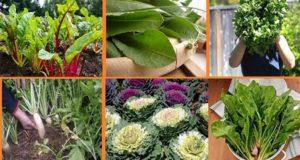 уникални растения