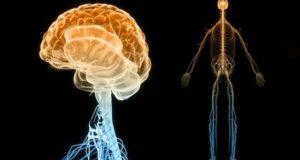 нервната система