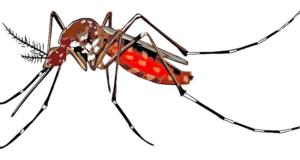 агресивните комари