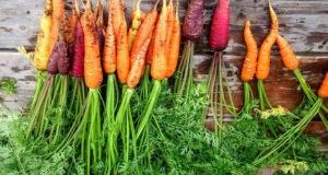 листа от морков