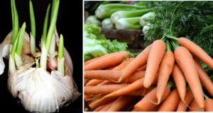 чесън и моркови