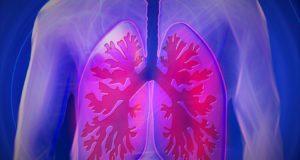 белите дробове