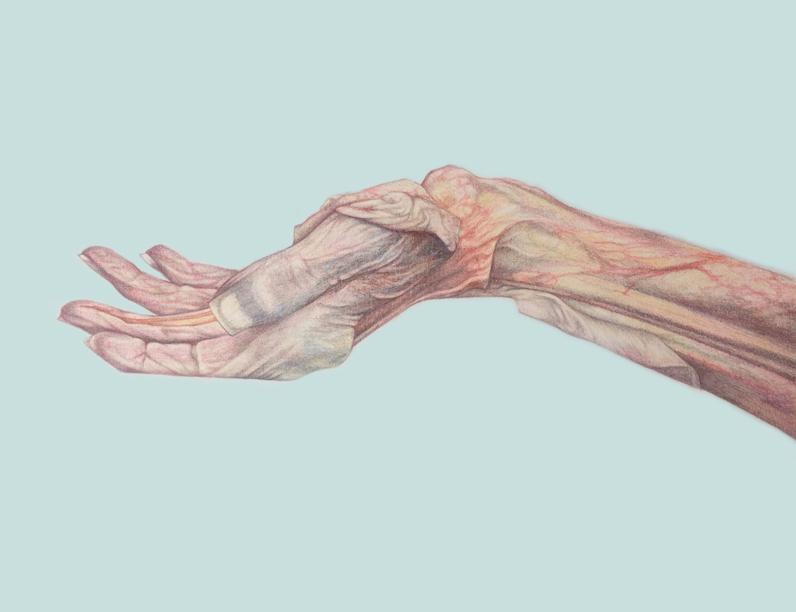 слабост в ръцете