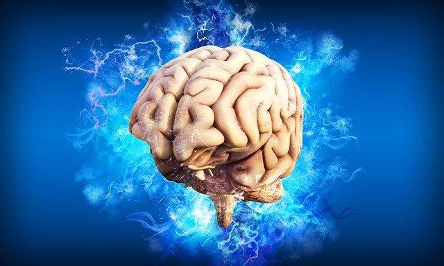 възстановяване на мозъчните клетки