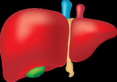 лек за черния дроб